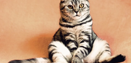 Cat Care – 5 Ways to Take Care of Your Cat