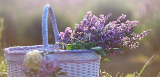 Fragrances and Seasons – Smell Perfect for Every Season